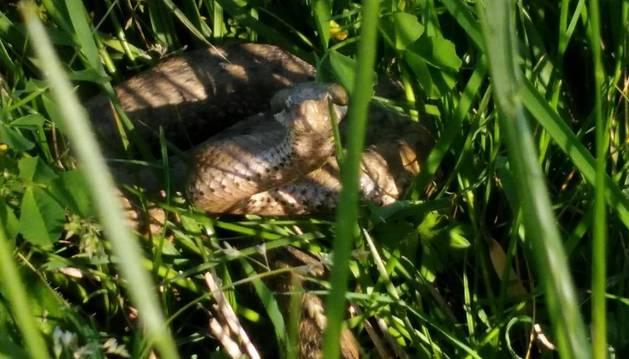 Fotografía del animal localizado en el límite con Lezkairu.