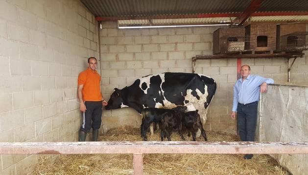 Mikel Martínez Dueñas y su padre, Miguel Martínez, junto a la vaca, que alimenta a sus terneros.