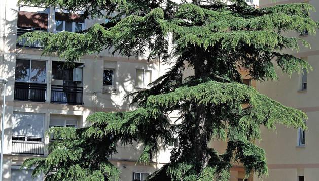 La cercanía y envergadura del árbol supone un inconveniente vecinal.