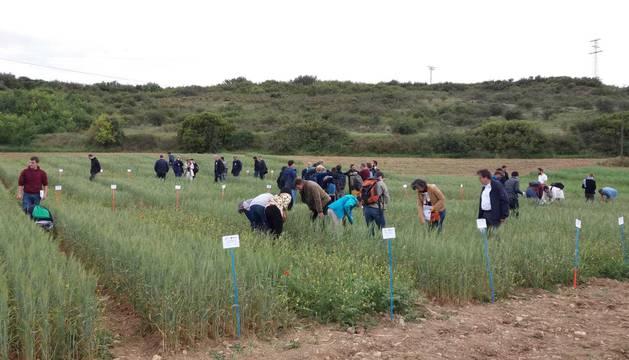 foto de El proyecto ReMIX aborda aspectos relacionados con la introducción de las mezclas de especies en los sistemas agrícolas europeos
