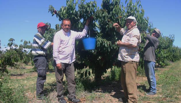 Varias personas posan para la foto mientras recogen cerezas en Milagro.