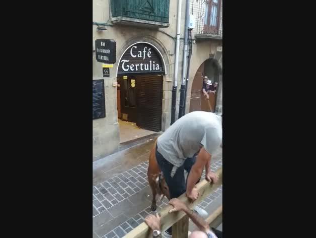 Una vaca navarra entra en un bar de Laguardia