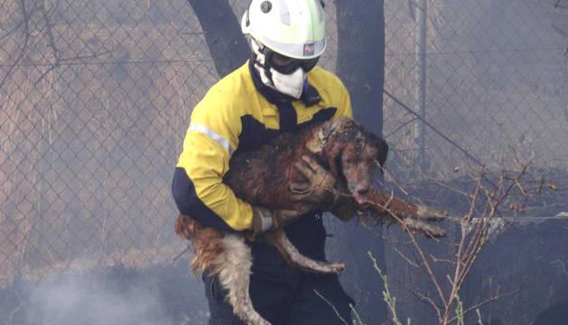 Un bombero evacúa a uno de los dos perros que sufrieron quemaduras.