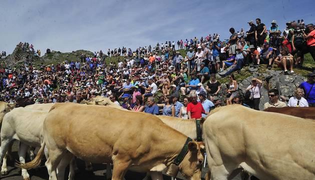 Ceremonia del tributo de las tres vacas