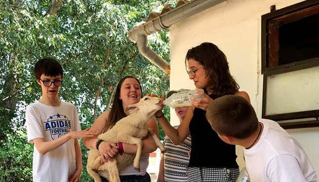 Foto de los participantes en el campamento dan de comer a unas ovejas.