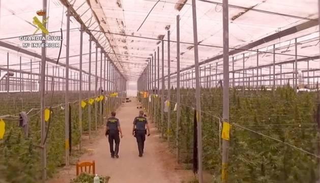 Uno de los invernaderos donde cultivaban la marihuana a gran escala.