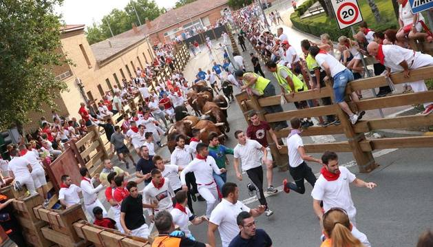 Foto de un momento del segundo encierro de fiestas de Tudela.