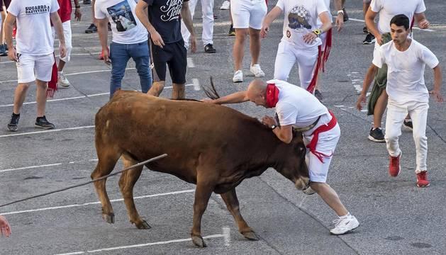 Una vaca castaña se descolgó  y embistió a los corredores.