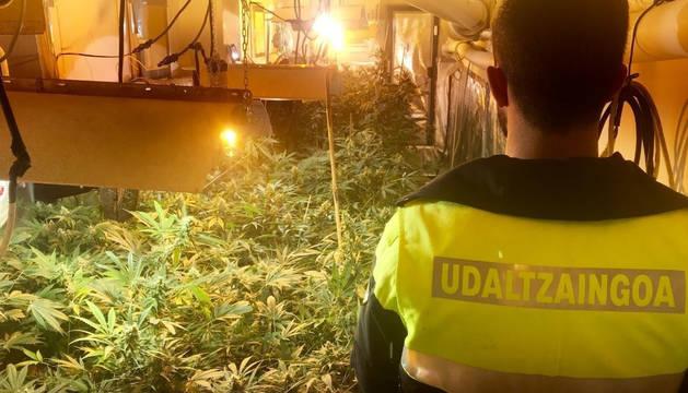 La policía cierra un club de cannabis en Bilbao y detiene a dos responsables