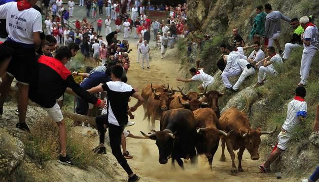 Todas las fotos del encierro del día 11 de agosto de del Pilón de Falces, una carrera que duró dos minutos y 15 segundos.