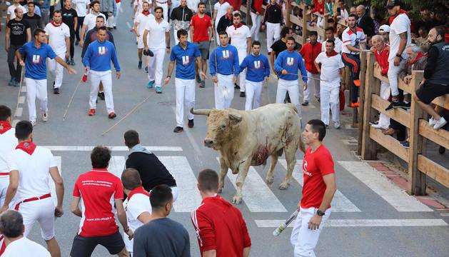 Foto del toro rezagado, en el segundo encierro de fiestas de Tafalla.