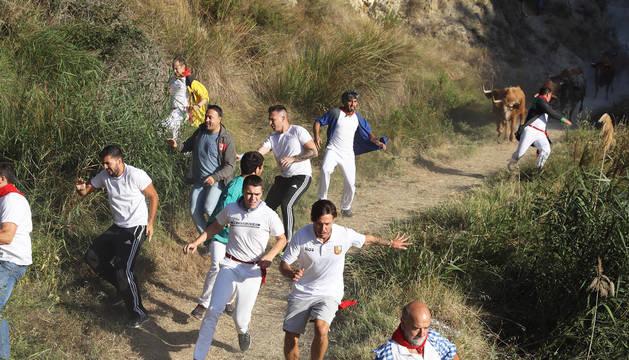 Foto de varios corredores durante el séptimo encierro del Pilón de Falces.