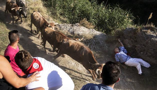 Las diez reses de Cárcar, que descendieron los 800 metros del recorrido a toda velocidad, dejaron decenas de mozos caídos a su paso.