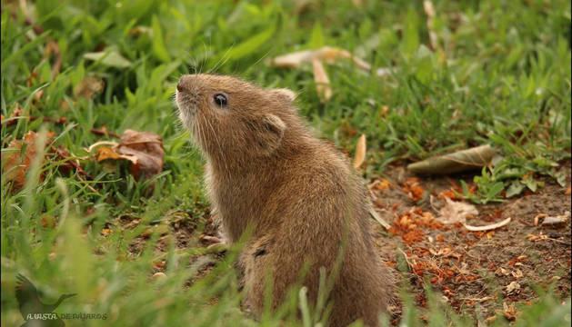 Otro de los individuos de la colonia de Mendillorri.
