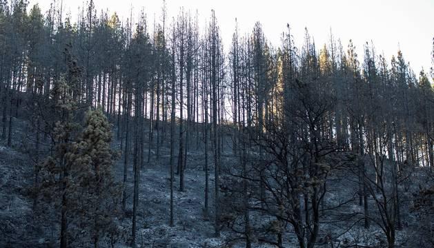 Zona afectada por el fuego de Gran Canaria