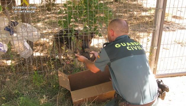 Momento en el que un Guardia Civil muestra a los cachorros a la madre.