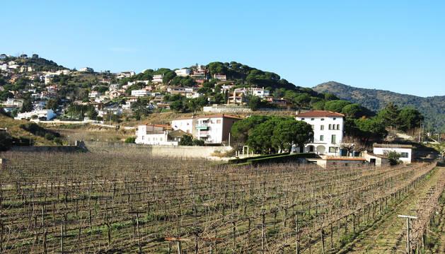 Imagen de un viñedo en el barrio de Can Comulada.
