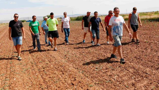 Foto de un grupo de agricultores caminando por una finca en la que los conejos se han comido numerosas plantas.