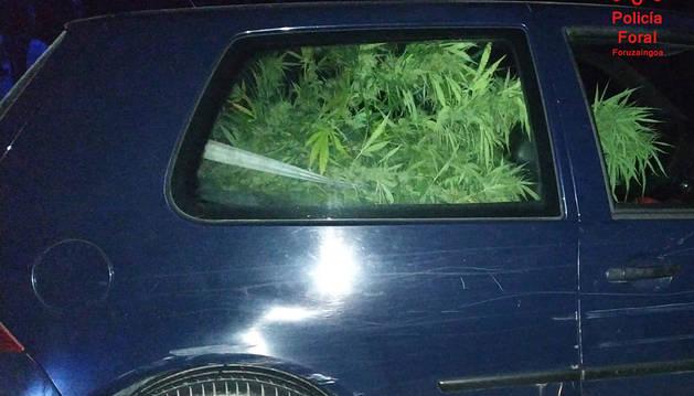 Imagen del vehículo interceptado con las plantas de marihuana en su interior.