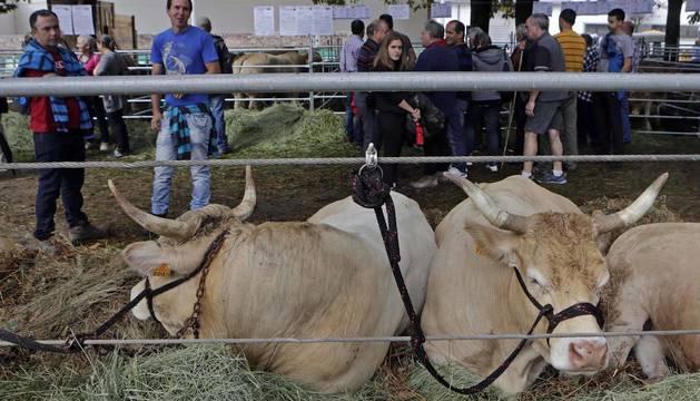Todas las fotos de la feria de la vaca pirenaica en Elizondo