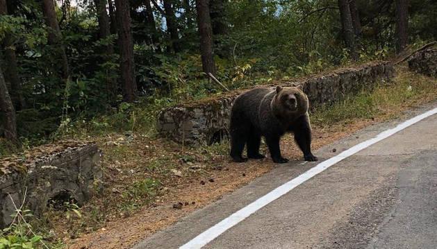 Foto de un supuesto oso en la carretera de Garde que circula estos días por WhatsApp.