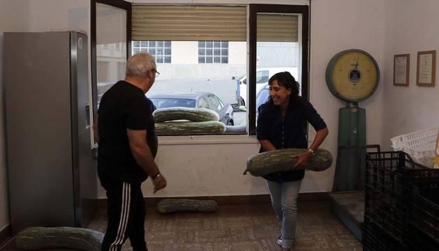 Voluntarios de la iniciativa 'Huertas solidarias de Sangüesa' recogen grandes calabazas depositadas en la ventana de su local.
