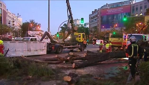 Un árbol cae en mitad del paseo de la Castellana de Madrid