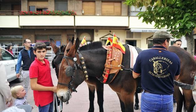 Feria del caballo en Marcilla