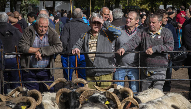 El rebaño de ovejas de raza manetx, de cabeza negra y cuernos. Las trajo Joseba Zelaieta Oharriz.