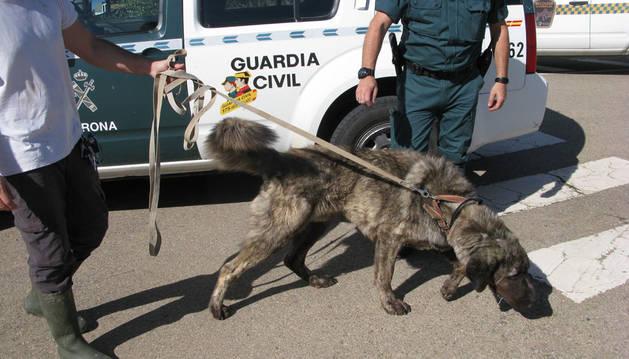 Un vecino de Arguedas, investigado por un presunto delito de maltrato animal