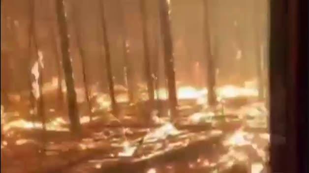 Las llamas arrasan en Australia reservas enteras de koalas