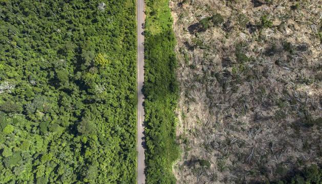 La deforestación en la Amazonía brasileña, en su mayor nivel desde 2008