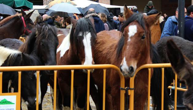 Foto de algunos de los ejemplares del ganado caballar que se mostró en la plaza de Santiago ayer.