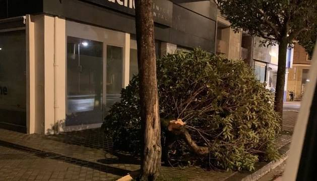 Más de 30 intervenciones en Pamplona por el viento: caída de árboles, vallas, andamios...