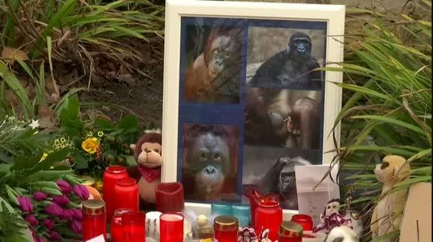 Mueren 30 animales por un incendio en un zoo alemán