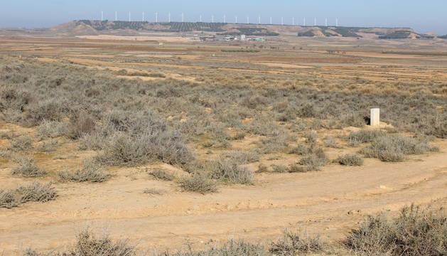 Terrenos del término de Campolasierpe que ocupará la futura planta solar fotovoltaica.