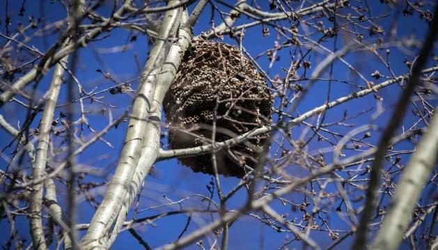 El nido puede verse sin problema en el entorno del lago, en la parte más alejada del Palacio.