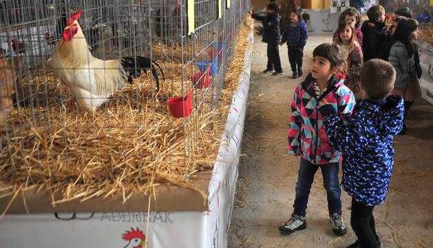 Escolares de diferentes centros educativos de Tafalla pasaron ayer a contemplar la muestra avícola.