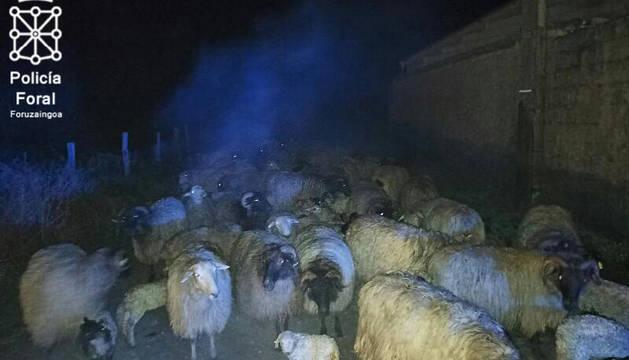 Muere una veintena de ovejas en el incendio de una granja en Olazagutia