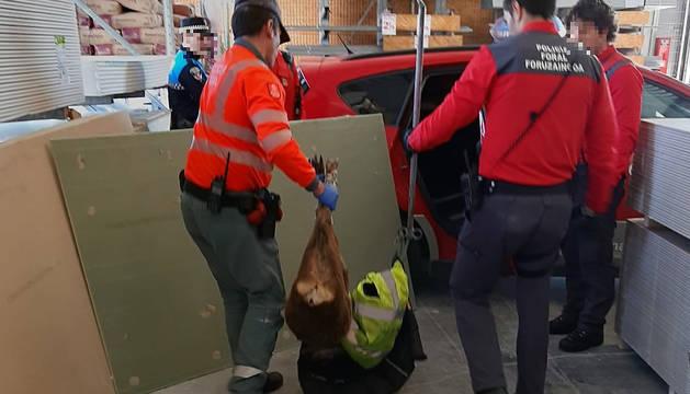 Agentes de la Policía Foral trasladan al animal.