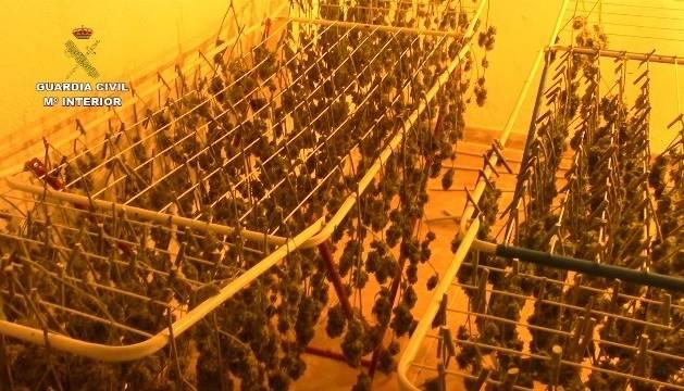 En los nueve registros practicados, la Guardia Civil ha encontrado cuatro plantaciones 'indoor' con 350 plantas de marihuana y 10 kilos de cogollos
