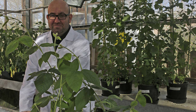 Iker Aranjuelo, fotografiado en el invernadero del Instituto de Agrobiotecnología donde se hacen algunas investigaciones.