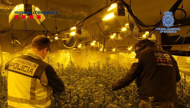 Detenidas 14 personas en Reus (Tarragona) por tráfico internacional de marihuana