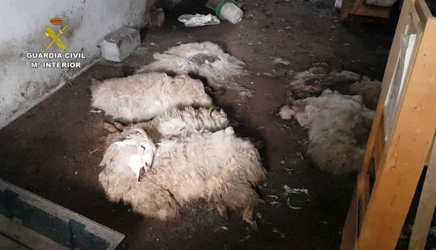 Imputado en Alsasua por ocupar una granja y tener animales en mal estado
