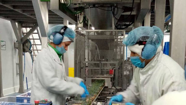 Foto de la línea de ensaladas preparadas en Florette. Dos personas trabajan con medidas de seguridad.