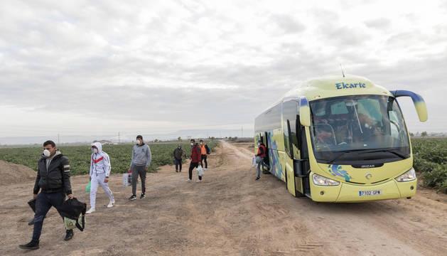 Los temporeros se apean del autobús guardando la distancia de seguridad. Han viajado con mascarilla y se disponen a recoger alcachofa de Tudela.