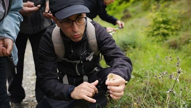 Oscar Pérez Andueza, en una de las excursiones que guía por el monte Ezkaba. Muestra una Pimpinela.