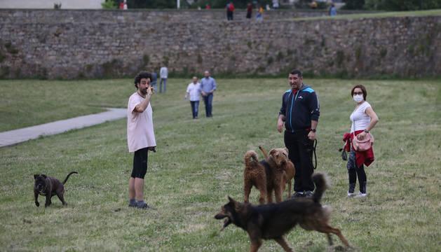 Foto de varias personas con sus perros, en la Vuelta del Castillo.