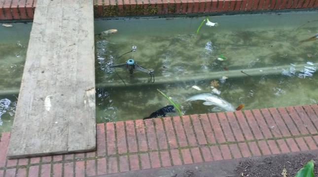 Uno de los peces muertos.