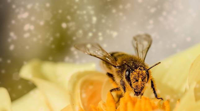 Imagen de archivo de una abeja.